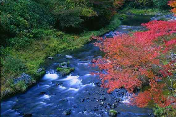 Flowered Stream